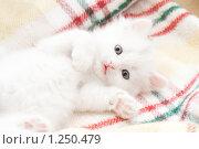 Маленький белый котенок. Стоковое фото, фотограф Андрей Щекалев (AndreyPS) / Фотобанк Лори
