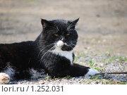 Купить «Черный кот пригрелся на солнышке», фото № 1252031, снято 22 августа 2009 г. (c) Анастасия Некрасова / Фотобанк Лори