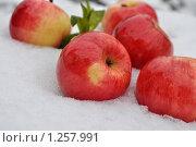 Яблоки на снегу. Стоковое фото, фотограф Павлова Елена / Фотобанк Лори