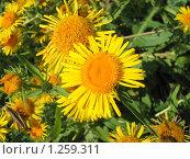 Луговые цветы. Стоковое фото, фотограф Александр Быков / Фотобанк Лори