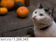 Купить «Кот», фото № 1266343, снято 13 ноября 2009 г. (c) Наталья Соловьева / Фотобанк Лори
