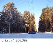 Синяя машина в зимнем сосновом бору. Стоковое фото, фотограф Вера Попова / Фотобанк Лори