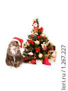 Купить «Кот в шапке Деда Мороза сидит у новогодней елки с подарками. Год Тигра.», фото № 1267227, снято 5 декабря 2009 г. (c) Ирина Карлова / Фотобанк Лори
