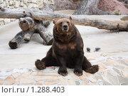 Медведь. Стоковое фото, фотограф Дмитрий Сушкин / Фотобанк Лори