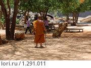 Монах и тигр. Тигровый монастырь в Тайланде (2009 год). Редакционное фото, фотограф Иванка Иванка / Фотобанк Лори
