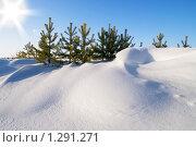 Купить «Зимний пейзаж. Сугроб у подножия молодых деревьев», фото № 1291271, снято 8 ноября 2009 г. (c) Икан Леонид / Фотобанк Лори