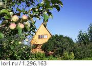 Купить «Дачный участок», фото № 1296163, снято 30 июля 2009 г. (c) Анастасия Семенова / Фотобанк Лори