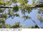 Танец деревьев. Стоковое фото, фотограф Юля Волкова / Фотобанк Лори