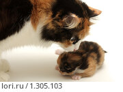 Купить «Заботливая мать», фото № 1305103, снято 29 ноября 2009 г. (c) Евгений Дубинчук / Фотобанк Лори