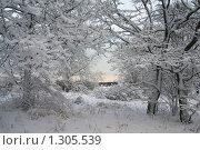 После снегопада. Стоковое фото, фотограф Виталий Фурсов / Фотобанк Лори