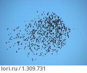 Купить «Стая птиц в небе», эксклюзивное фото № 1309731, снято 19 декабря 2009 г. (c) lana1501 / Фотобанк Лори