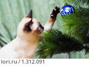 Купить «Кошка охотится на елочный шар», фото № 1312091, снято 20 декабря 2009 г. (c) Недзельская Татьяна / Фотобанк Лори