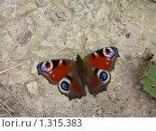 Бабочка на дорожке. Стоковое фото, фотограф Светлана Власенко / Фотобанк Лори