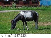 Купить «Пони», эксклюзивное фото № 1317323, снято 27 июля 2009 г. (c) lana1501 / Фотобанк Лори