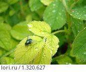 Дождевая вода полезна для организма! Стоковое фото, фотограф Нина Солнцева / Фотобанк Лори