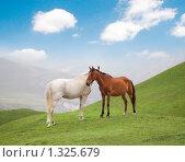 Купить «Две лошади в горах», фото № 1325679, снято 28 июля 2006 г. (c) Elnur / Фотобанк Лори