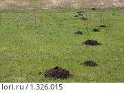 Купить «Кротовьи норы на лугу весной», фото № 1326015, снято 5 апреля 2009 г. (c) Галина  Горбунова / Фотобанк Лори