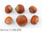 Шесть лесных орехов, изолированы на белом фоне. Стоковое фото, фотограф Алексей Головин / Фотобанк Лори
