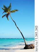 Купить «Дикий пляж с пальмой и белоснежным песком», фото № 1341343, снято 15 декабря 2009 г. (c) Мария Смирнова / Фотобанк Лори