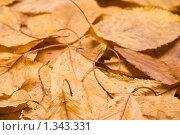 Купить «Осенние листья», фото № 1343331, снято 25 декабря 2009 г. (c) Влад  Плотников / Фотобанк Лори