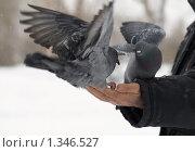 Купить «Голубь на ладони», фото № 1346527, снято 6 января 2010 г. (c) Andrey M / Фотобанк Лори