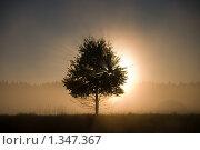 Новый день. Стоковое фото, фотограф Александр Рыбакин / Фотобанк Лори