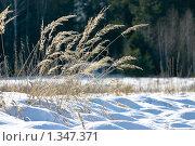 Зимний ковыль. Стоковое фото, фотограф Александр Рыбакин / Фотобанк Лори