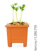 Купить «Зеленый росток на золотых монетах», фото № 1350719, снято 19 июля 2009 г. (c) Elnur / Фотобанк Лори