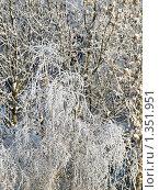 Зимний пейзаж - деревья в снегу. Стоковое фото, фотограф Вячеслав Маслов / Фотобанк Лори