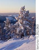 Покрытые снегом сосны. Стоковое фото, фотограф Евгений Прокофьев / Фотобанк Лори