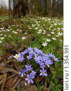 Купить «Весна», фото № 1354991, снято 1 мая 2006 г. (c) Владимир Блинов / Фотобанк Лори
