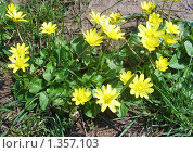 Первые цветы весны. Стоковое фото, фотограф Вера Сидиропуло / Фотобанк Лори