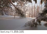 Зимний лес. Стоковое фото, фотограф Кельс Андрей / Фотобанк Лори