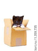 Купить «Котенок в коробке», фото № 1359735, снято 18 апреля 2009 г. (c) Константин Тавров / Фотобанк Лори