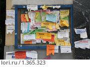Доска объявлений (2008 год). Редакционное фото, фотограф Кирюшина Евгения / Фотобанк Лори