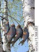 Рыба. Стоковое фото, фотограф Кирюшина Евгения / Фотобанк Лори
