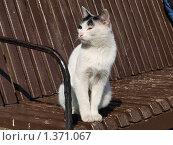 Кошка на скамье. Стоковое фото, фотограф Андрей Траханов / Фотобанк Лори