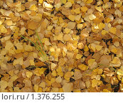 Желтые листья на земле. Стоковое фото, фотограф Евгения Никифорова / Фотобанк Лори