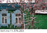 Рябина в снегу. Стоковое фото, фотограф Евгения Никифорова / Фотобанк Лори