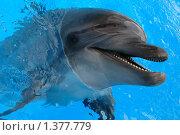 Улыбка дельфина. Стоковое фото, фотограф Николай Бескоровайный / Фотобанк Лори