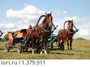 Купить «Боголюбово, лошадки», эксклюзивное фото № 1379911, снято 8 августа 2009 г. (c) lana1501 / Фотобанк Лори