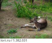 Купить «Кенгуру», фото № 1382031, снято 22 сентября 2009 г. (c) Евдокимова Мария Борисовна / Фотобанк Лори