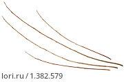 Купить «Ивовые прутья. Изолировано на белом фоне», фото № 1382579, снято 16 января 2010 г. (c) Михаил Котов / Фотобанк Лори