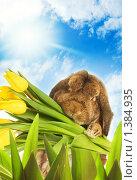 Пасхальный кролик с тюльпанами. Стоковое фото, фотограф Andrejs Pidjass / Фотобанк Лори
