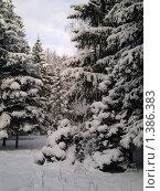Купить «Сказочная зима. Главный Ботанический сад. Москва», фото № 1386383, снято 1 января 2010 г. (c) Елена Колтыгина / Фотобанк Лори