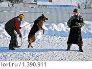 Купить «На дрессировочной площадке», фото № 1390911, снято 17 января 2010 г. (c) Андрей Стогов / Фотобанк Лори