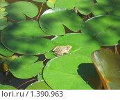 Лягушка. Стоковое фото, фотограф Павел Крутихин / Фотобанк Лори
