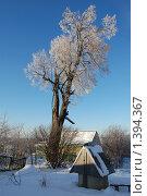 Купить «Роскошная липа в инее», фото № 1394367, снято 19 января 2010 г. (c) Никонор Дифотин / Фотобанк Лори