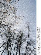 Купить «Вид неба», фото № 1395627, снято 30 сентября 2007 г. (c) Кирюшина Евгения / Фотобанк Лори