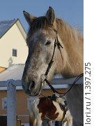 Купить «Морда лошади», фото № 1397275, снято 16 января 2010 г. (c) Яременко Екатерина / Фотобанк Лори